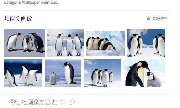 ペンギン写真での検索結果2