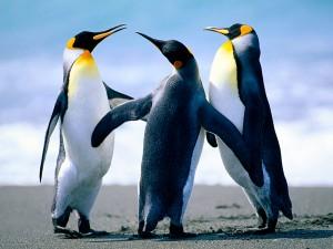 ペンギンが3匹